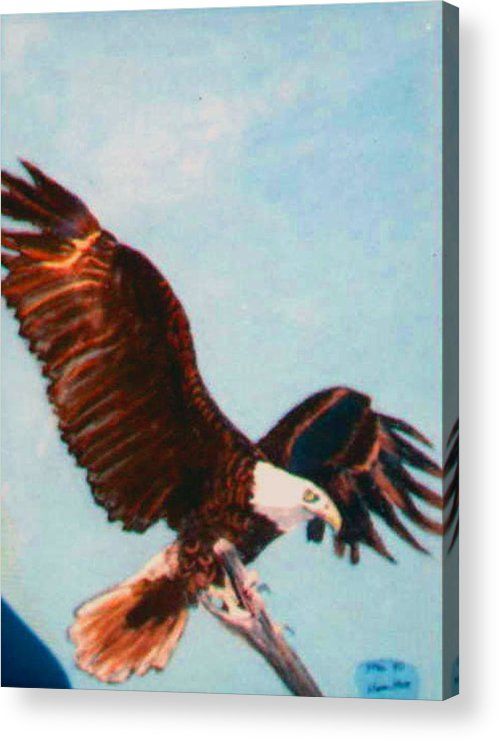 Eagle Acrylic Print featuring the painting Eagle Ready for Flight by Stan Hamilton