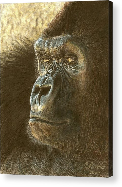 Gorilla Acrylic Print featuring the drawing Gorilla by Marlene Piccolin