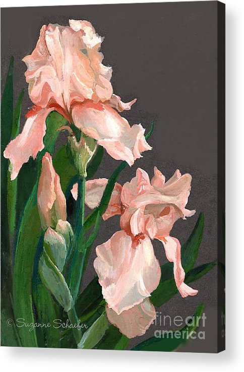 Flowers Acrylic Print featuring the painting Iris Study by Suzanne Schaefer