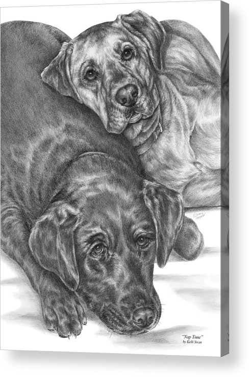 Two Acrylic Print featuring the drawing Labrador Dogs Nap Time by Kelli Swan