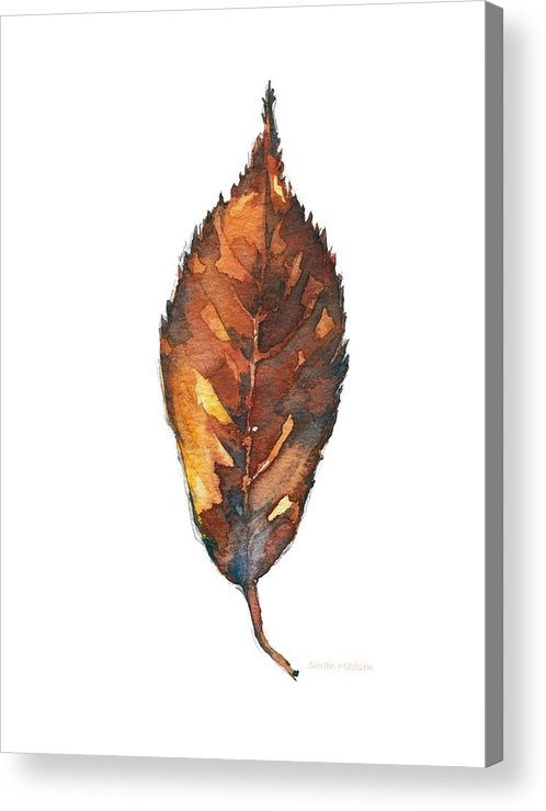 Leaf Acrylic Print featuring the painting Little Brown Leaf by Sarah Madsen
