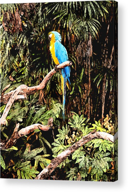 Parrot Acrylic Print featuring the photograph Parrot by Steve Karol