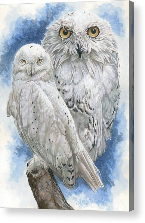 Snowy Owl Acrylic Print featuring the mixed media Radiant by Barbara Keith