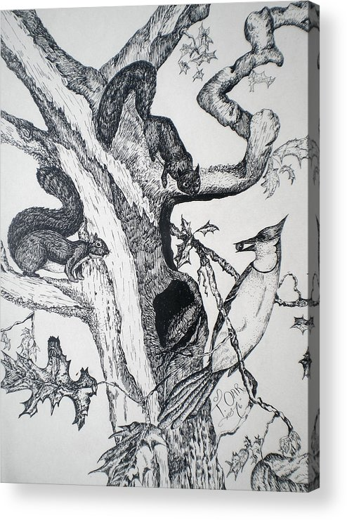 Nature Acrylic Print featuring the drawing Squirrels And Bird by Tammera Malicki-Wong