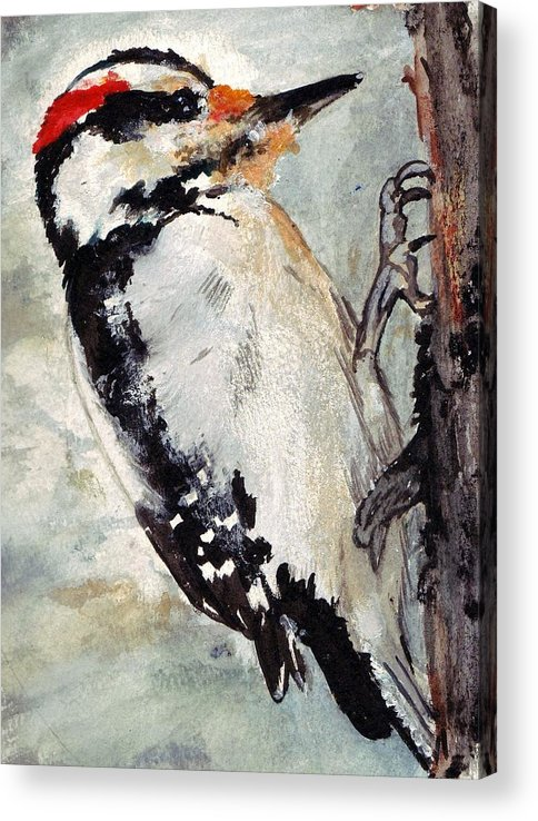 Hairy Woodpecker Acrylic Print featuring the painting Tappity Tap by Debra Sandstrom