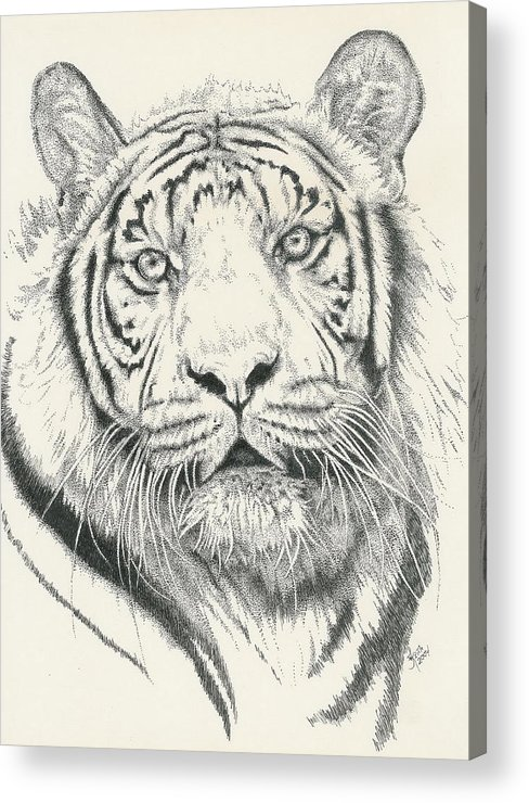 Tiger Acrylic Print featuring the drawing Tigerlily by Barbara Keith