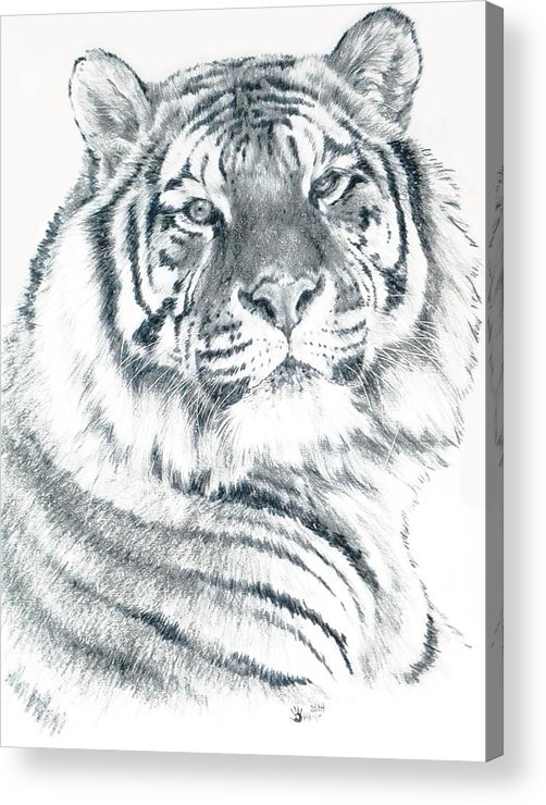 Tiger Acrylic Print featuring the drawing Voyager by Barbara Keith
