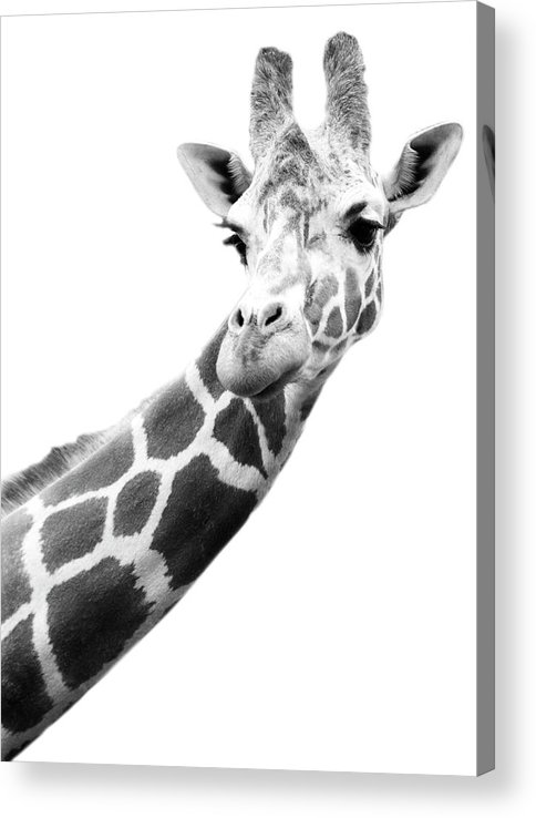 Long Acrylic Print featuring the photograph Black And White Portrait Of A Giraffe by Design Pics