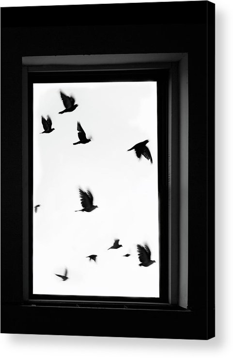 Spooky Acrylic Print featuring the photograph Flock Of Crows Seen Through A Window by Grant Faint