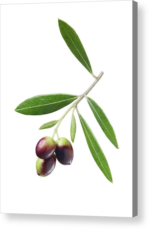 White Background Acrylic Print featuring the photograph Olives On Branch by Lauren Burke