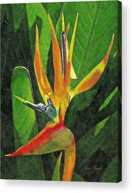 Bird Of Paradise Acrylic Print featuring the digital art Subject Paradise by James Temple