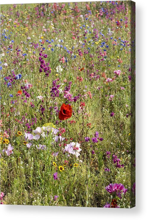 Outdoors Acrylic Print featuring the photograph Mixed colourful wildflowers by Lyn Holly Coorg
