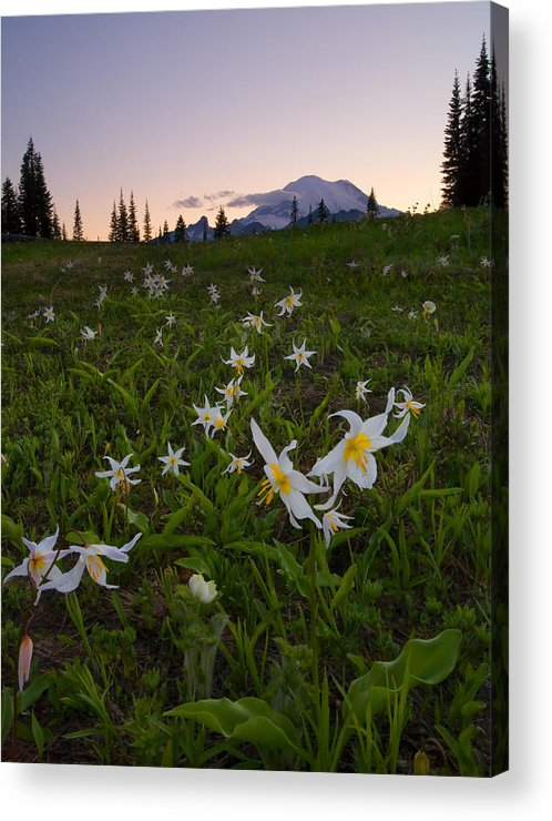 Lillies Acrylic Print featuring the photograph Avalanche of Lillies by Mike Dawson