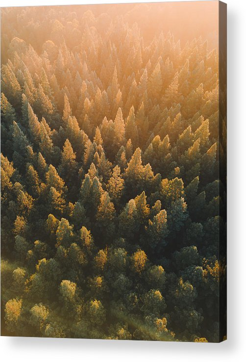 Tranquility Acrylic Print featuring the photograph High Angle View Of Trees In Forest by Connor Vaughan / EyeEm
