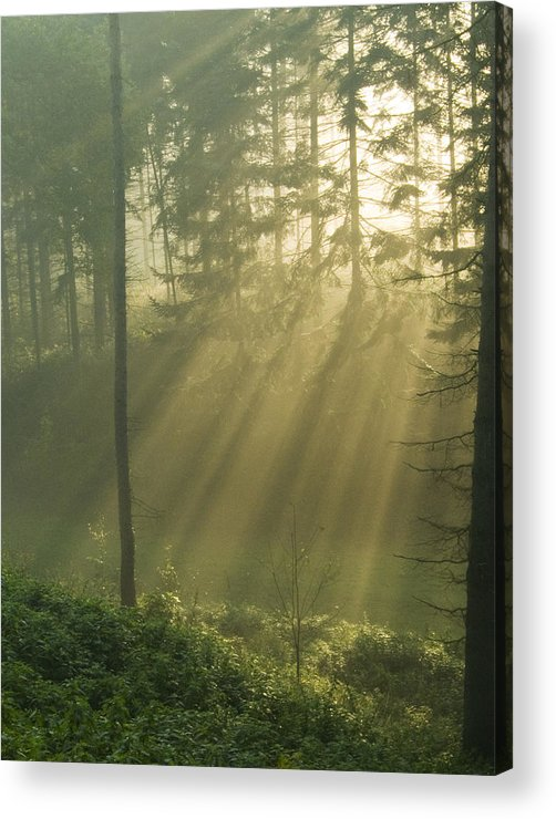 Nature Acrylic Print featuring the photograph Light from Heaven by Daniel Csoka