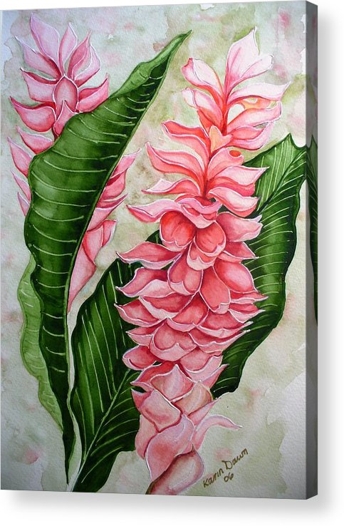 Flower Painting Floral Painting Botanical Painting Ginger Lily Painting Original Watercolor Painting Caribbean Painting Tropical Painting Acrylic Print featuring the painting Pink Ginger Lilies by Karin Dawn Kelshall- Best