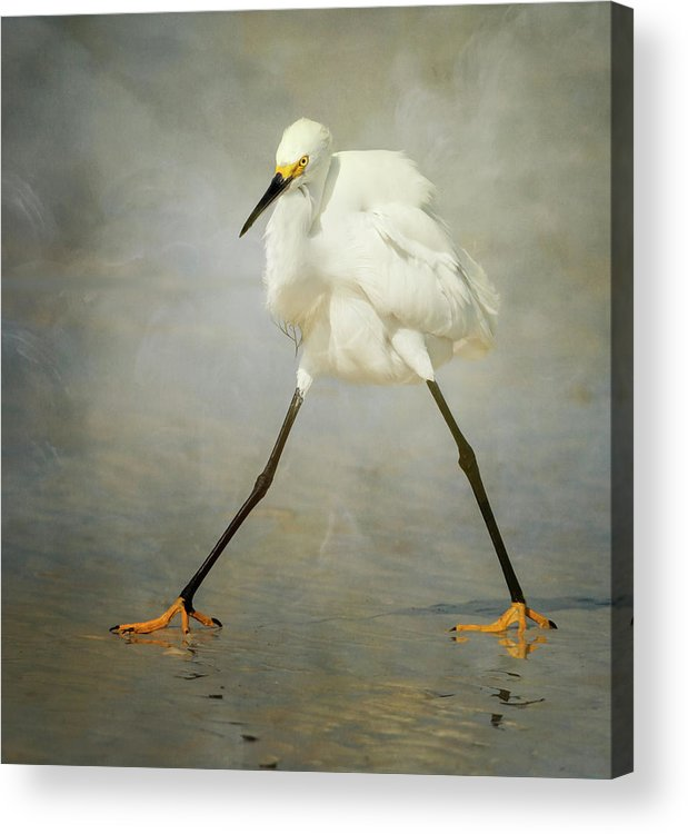 Bird Acrylic Print featuring the photograph The Rock Star by Alfred Forns