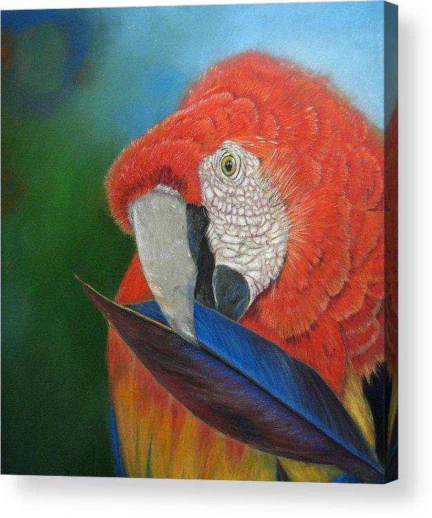 Bird Acrylic Print featuring the painting Presumida by Melanie Alvarado