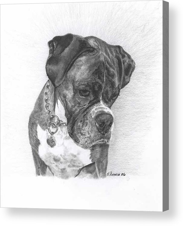 My Boxer Acrylic Print featuring the drawing Tyson by Marlene Piccolin