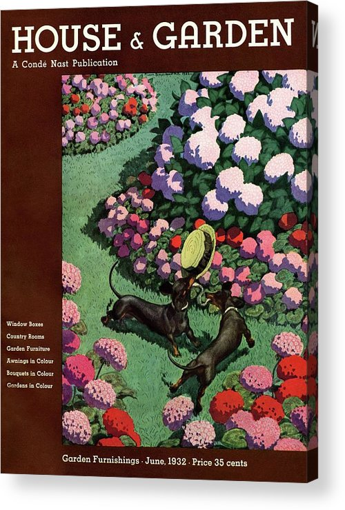 Illustration Acrylic Print featuring the photograph A House And Garden Cover Of Dachshunds With A Hat by Pierre Brissaud