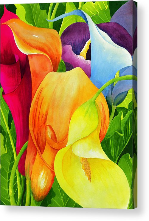 Flower Paintings Acrylic Print featuring the painting Calla Lily Rainbow by Janis Grau