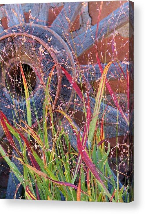 Fall;fallcolors;grass;pinos Altos;new Mexico Acrylic Print featuring the photograph Dance Of The Wild Grass by Feva Fotos