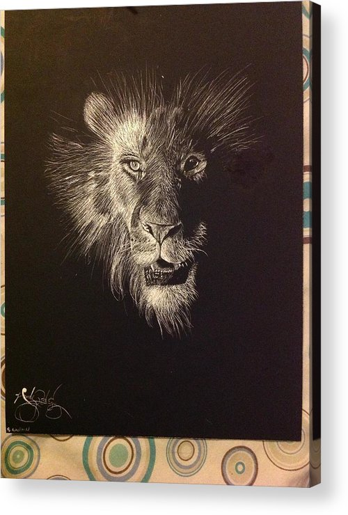 Lion Acrylic Print featuring the drawing Lion by Andy Rodriguez