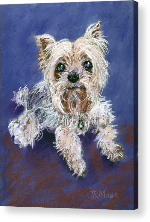 Yorkshire Terrier Acrylic Print featuring the pastel Sweet Yorkie by Julie Maas