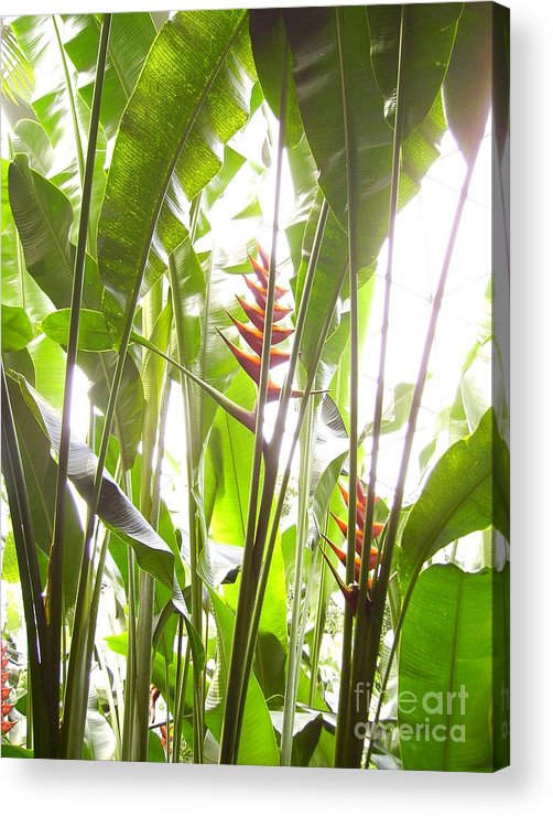 Plants Acrylic Print featuring the photograph Tropical2 by Heather Morris
