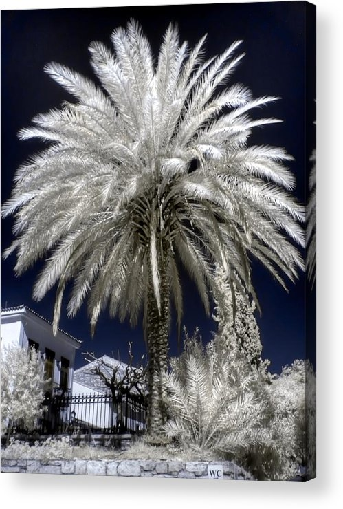 Athens Acrylic Print featuring the photograph Under The Palm Tree by Michael Tzacostas