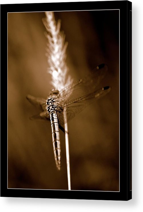 Dragonfly Acrylic Print featuring the photograph Dragonfly by Helen Ahlers