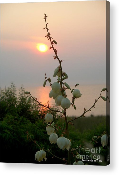 Sunset Acrylic Print featuring the photograph Sunset Bouquet by Glenn McCurdy