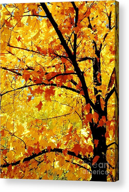 Nature Acrylic Print featuring the photograph 09032015034 by Debbie L Foreman