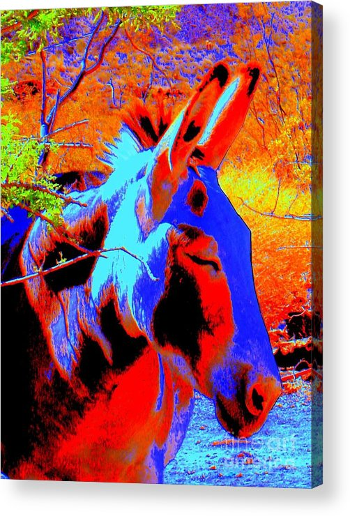 Burro Acrylic Print featuring the photograph Oatman Burro by Lessandra Grimley