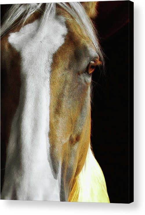 Horse Acrylic Print featuring the photograph Palomino by JAMART Photography