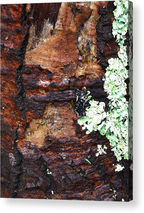Sublime Acrylic Print featuring the photograph Age Scars Nor Attacks Can Mar Her Beauty by Terrance DePietro