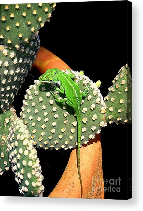 Nature Acrylic Print featuring the photograph Anole Hanging Out With Cactus by Lucyna A M Green