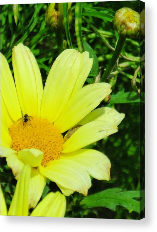 Flower Acrylic Print featuring the photograph Beautiful by Peter Mowry