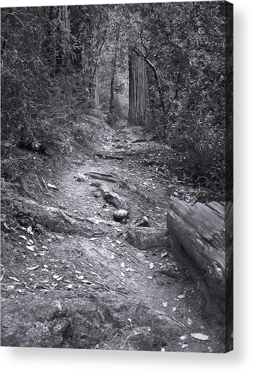 Landscape Acrylic Print featuring the photograph Big Basin Redwoods Sp 1 by Karen W Meyer