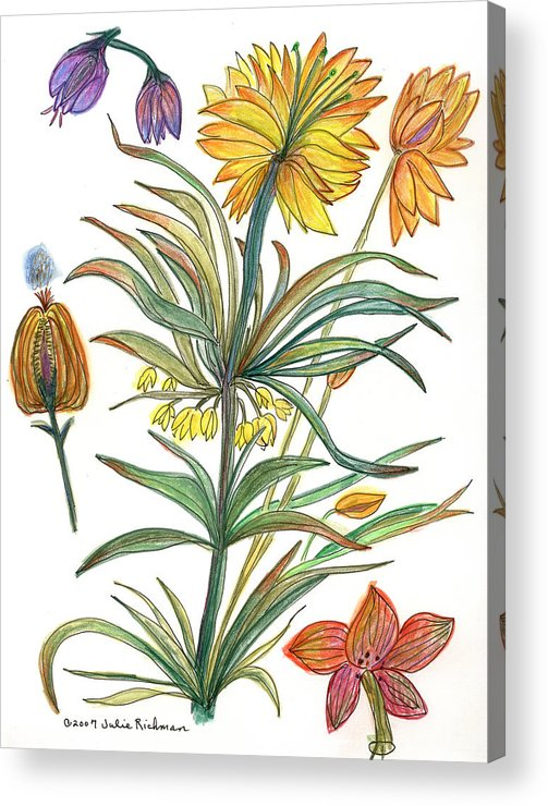 Flowers Nature Botany Watercolor Yellow Drawing Julie Richman Flora Pencil Acrylic Print featuring the painting Botanical Flower-53 Yellow Flower by Julie Richman