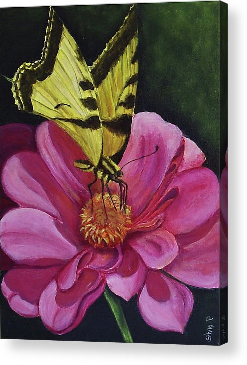 Flower Acrylic Print featuring the painting Butterfly On A Pink Daisy by Silvia Philippsohn