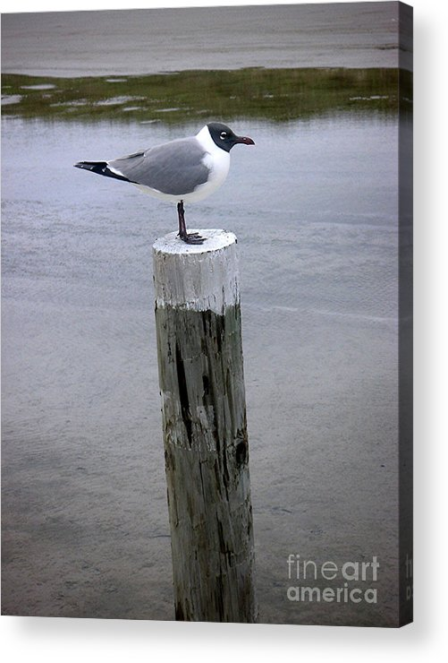 Nature Acrylic Print featuring the photograph Creatures Of The Gulf - Keeping Watch by Lucyna A M Green