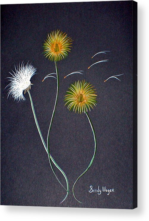 Dandelion Acrylic Print featuring the painting Dandelions1 by Sandy Wager