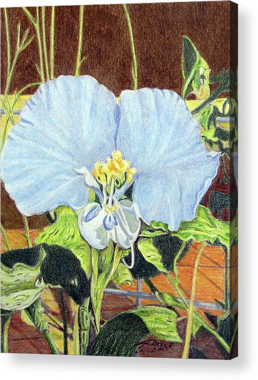 Fuqua - Artwork Acrylic Print featuring the drawing Day Flower by Beverly Fuqua