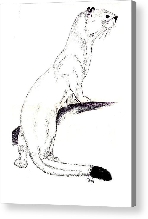 Weasel Acrylic Print featuring the painting Ermine by Debra Sandstrom