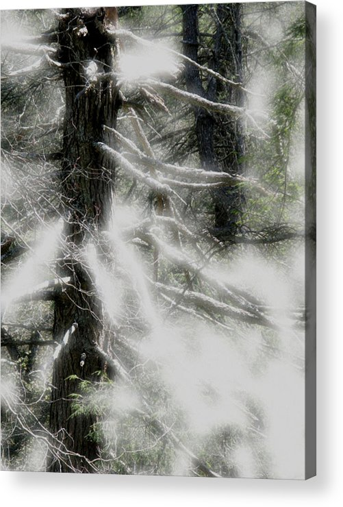 Trees Acrylic Print featuring the digital art Georgia Pines by Donna Thomas