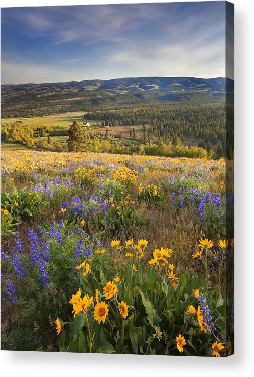 Wildflowers Acrylic Print featuring the photograph Golden Valley by Mike Dawson