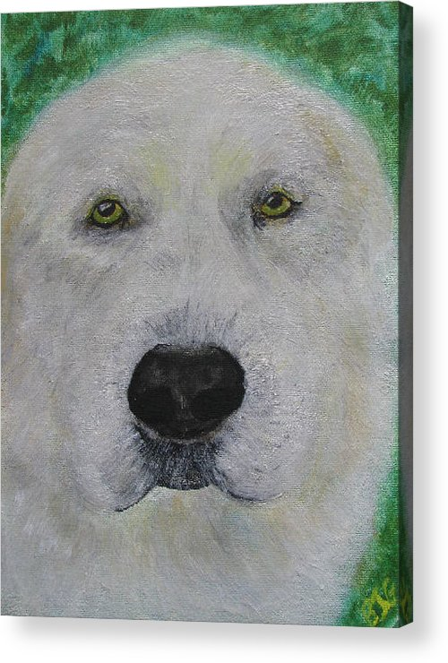 Dog Lab Yellow Labrador Retriever Dogs Pup Puppies Domestic Animal Animals Pet Pets Acrylic Print featuring the painting Hanmee 1 by Barbara Giordano