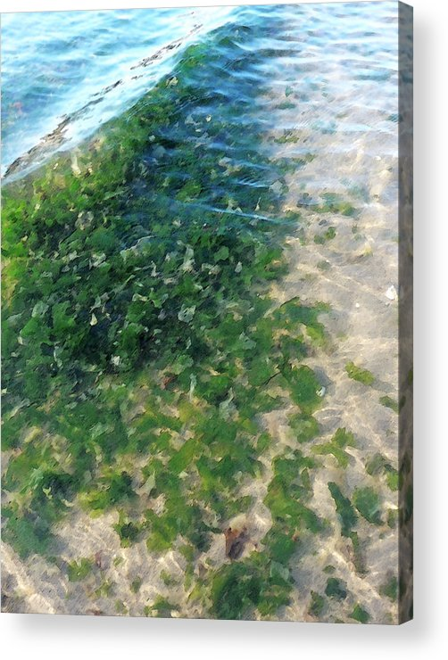 Kelp Acrylic Print featuring the photograph Kelp At Low Tide Line by Margie Avellino