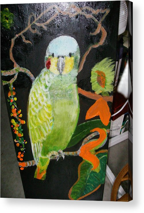 Bird Green Amazon Red Acrylic Print featuring the painting Lacey Jewel Bird by Anne-Elizabeth Whiteway